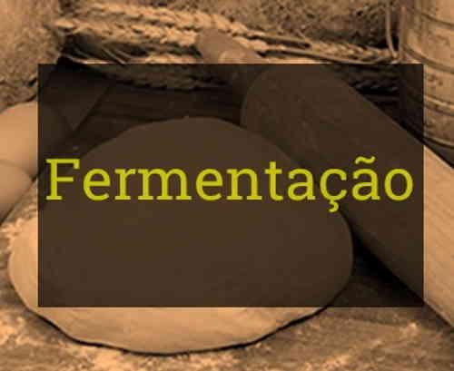 Fermentação - Resumo de Biologia