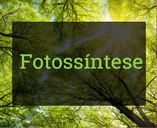 Fase Escura Fase Clara da fotossíntese