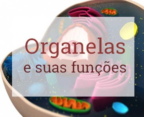 As Organelas da Célula