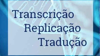 Transcrição, Replicação e Tradução