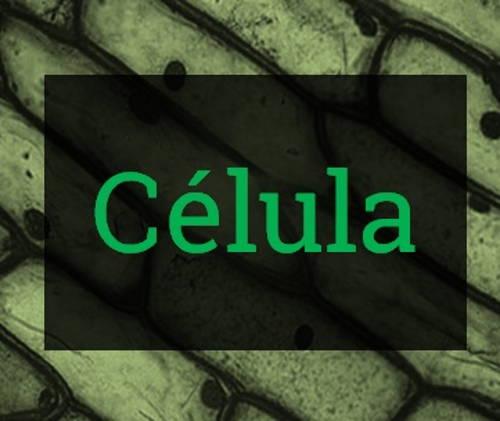 Teoria Celular, células procariontes e eucariontes, estrutura da célula (organelas), diferença entre célula animal e vegetal